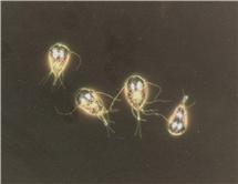 papillómák a testen, mint kezelni a vastagbélrák örökletes